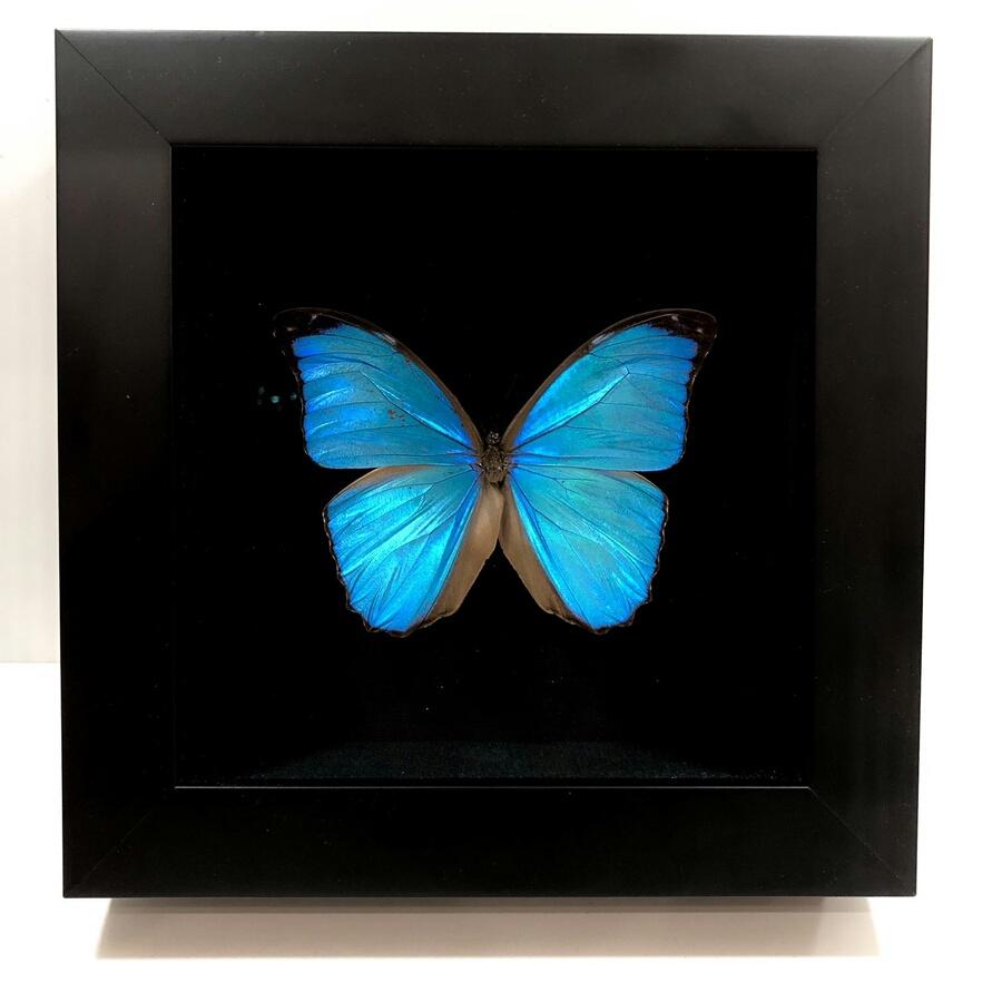 Бабочка для циферблата